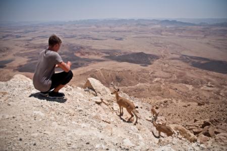 mountain goats: Capre di montagna nel deserto del Negev Israele