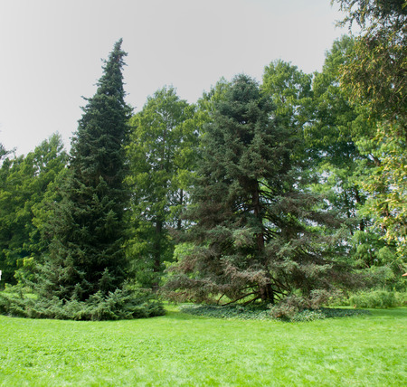 baden wurttemberg: landscaped park with green lawn. on the island of Mainau. Germany