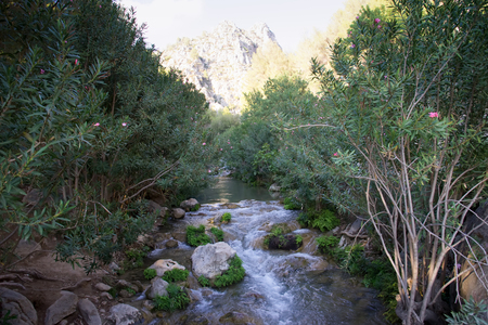 Sources of the river Algar in Callosa de Ensarria, province of Valensia , near Alicante. Spain. Stock Photo
