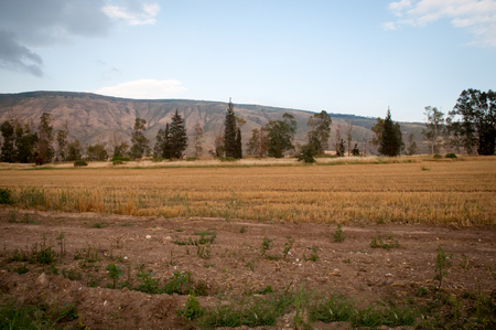 Rural landscape. Month April . North of Israel. Stock Photo