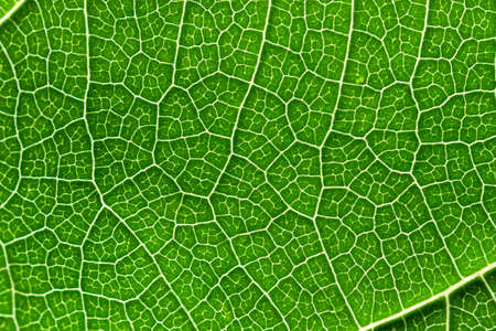 Close-up of a textured green leaf with fanciful patterns formed by veins. Photo can be used as background, texture for decoration and design. 스톡 콘텐츠
