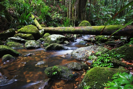 Waterfall Stream in a rainforest photo