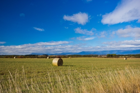 Hay Balles in a field, Tasmania photo