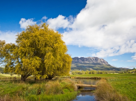 weeping willow: Mt Roland, Tasmania Stock Photo