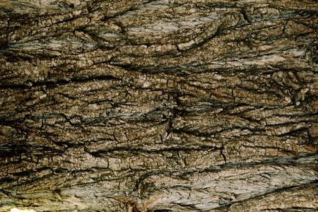 arbol alamo: Álamo textura de la foto del árbol. el fondo de madera rústica natural. Alta resolución corteza de telón de fondo. Foto de archivo