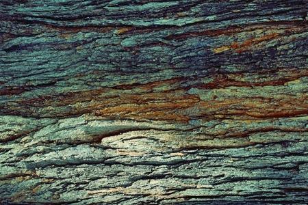 Catalpa (catawba) Baum Foto in hoher Auflösung Textur. Natürliche rustikale Holz Hintergrund. Cigar Baumrinde Hintergrund.