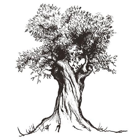 olive tree 일러스트