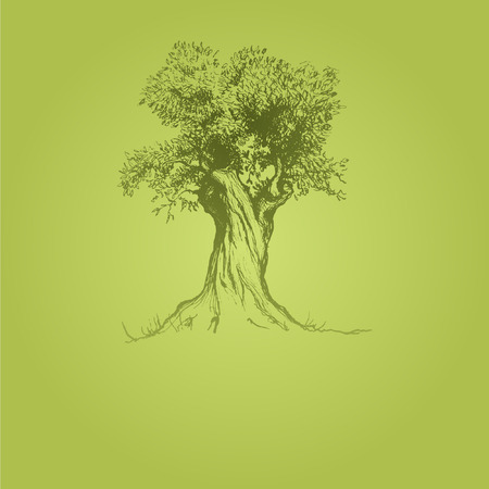 olive tree green