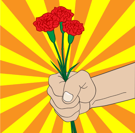 carnations: pshmu carnations