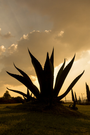 alma: Maguey, soul of Mexico