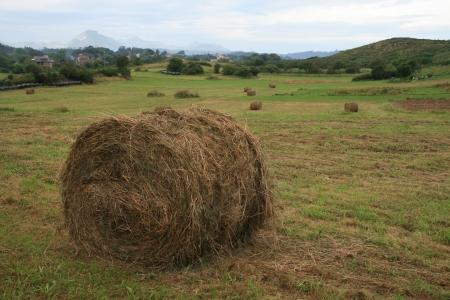 agricultura: recogida de la siembra