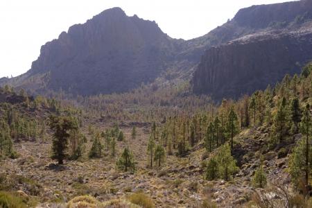 volcanic landscape: volcanic landscape with several trees