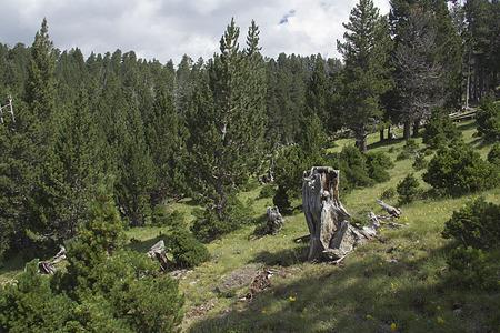 ordesa: forest in ordesa Stock Photo