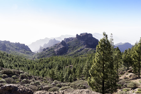 canary island: landscape in canary island