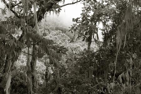 kilimanjaro: jungle in the mount kilimanjaro