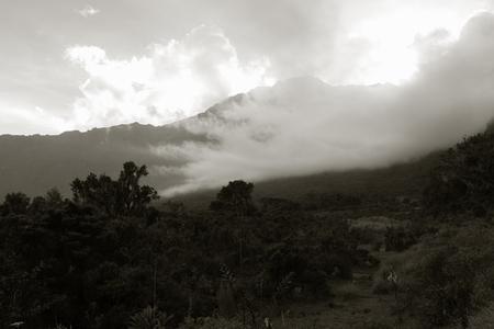 kilimanjaro: view of mount kilimanjaro