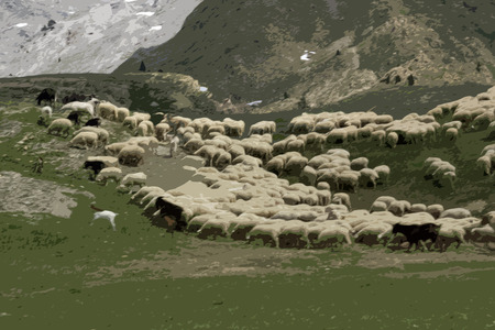 sheep in pyrenees Stock Photo