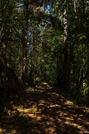 forest in the north of spain