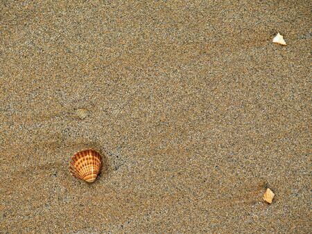 de schelpen in het zand