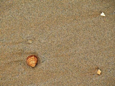 the shells in the sand