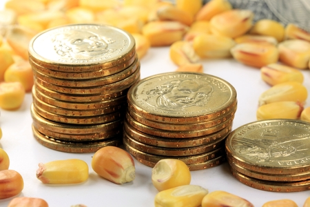 Commodity Market - Futures and Options Trading Concept with corn and American currency