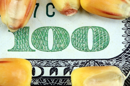 commodity: Commodity Market - Futures and Options Trading Concept with corn and American currency