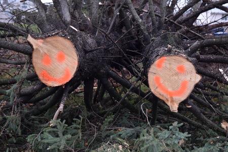 떨어지는 나무의 끝 부분에 웃는 얼굴 폭풍 유머 스톡 콘텐츠