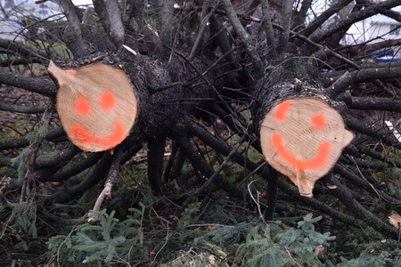 outage power: Smiley face storm humor on cut ends of downed trees Stock Photo