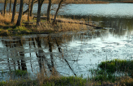 watershed: Ponds edge, late afternoon