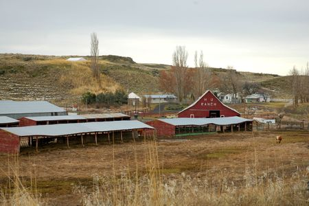 palouse: Cattle Ranch in the Palouse region of southwestern Washington State