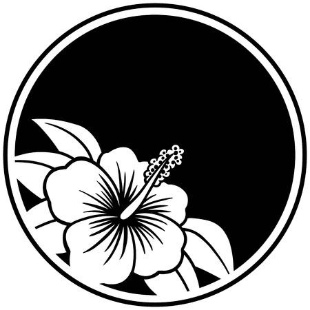 Hibiscus Insignia