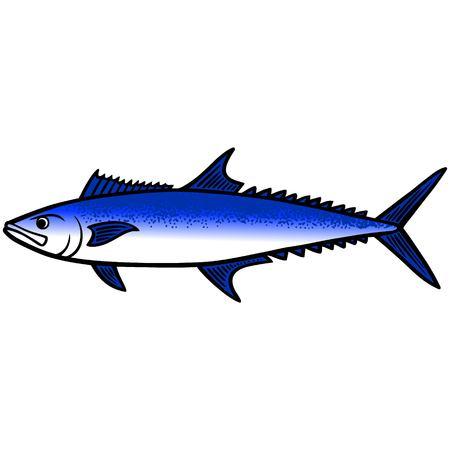 King Mackerel Fish Çizim