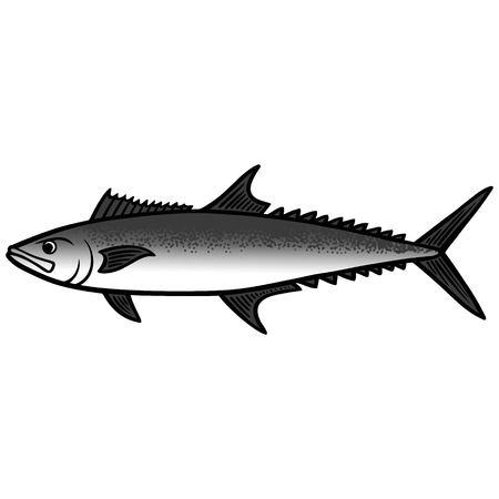 King Mackerel Fish illustration