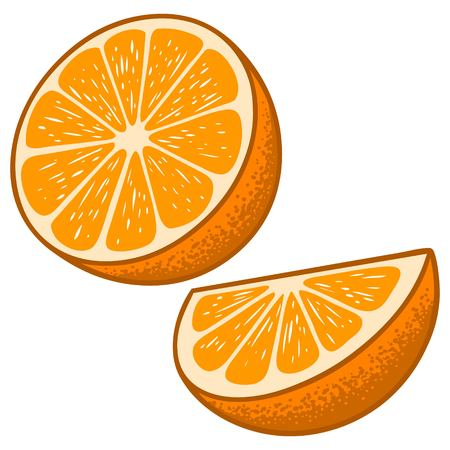 citric: Orange Slices Illustration