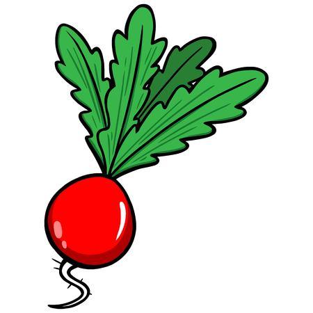 radish: Radish Illustration