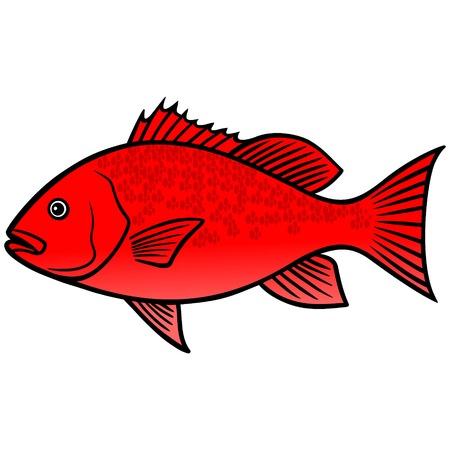 붉은 도미 물고기