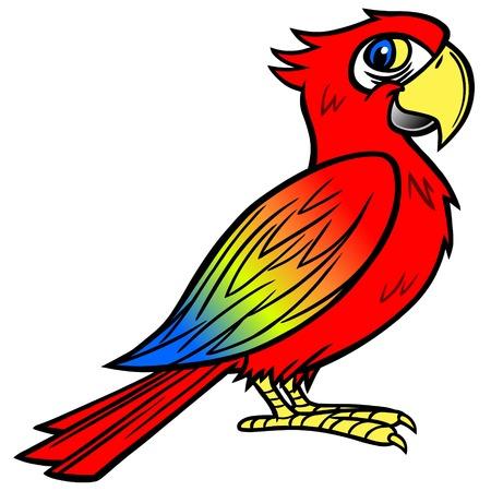 macaw: Scarlet Macaw