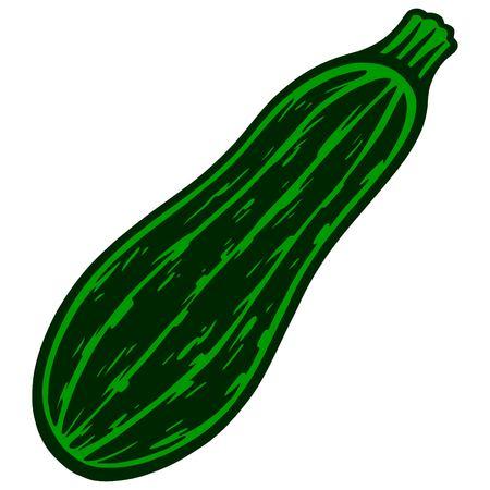 zucchini: Zucchini Illustration