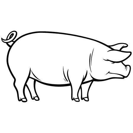 illustration: Pig Illustration Illustration