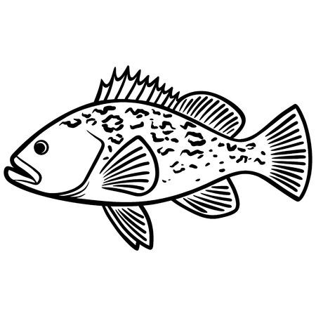 ハタの魚イラスト 写真素材 - 71556284