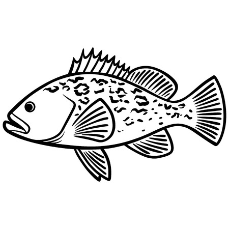 474 Grouper Fish Cliparts Stock Vector And Royalty Free Grouper