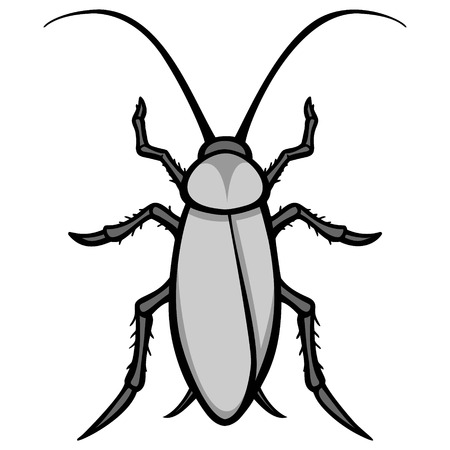 Roach Illustration