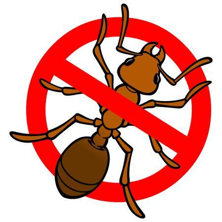 No Ant