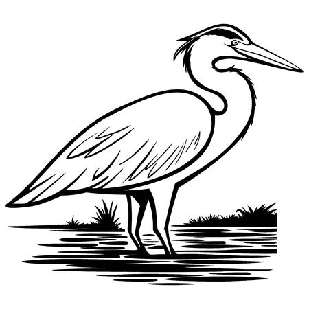 Heron Illustration Çizim