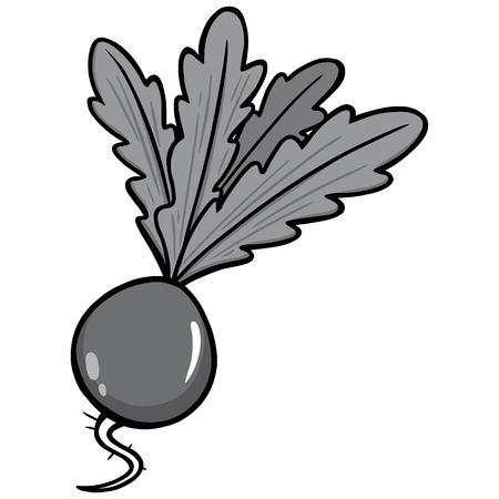 Radish Illustration - A vector cartoon illustration of a garden fresh Radish.