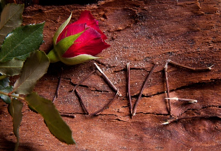 Composition as word love with red rose. For themes like love, valentines day Stock Photo