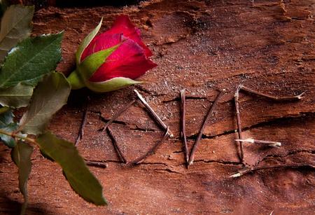 Zusammensetzung als Wort Liebe mit roten Rose. Für Themen wie Liebe, Valentinstag Standard-Bild