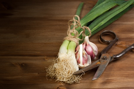 Onion, garlic and old scissors on a wooden table photo