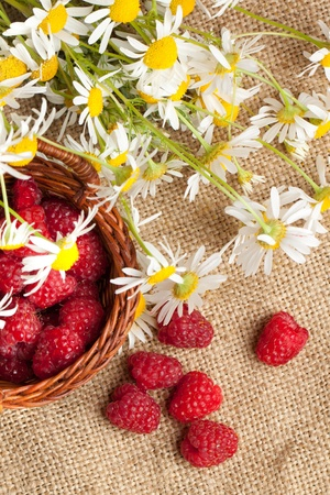 oxeye: Basket of fresh ripe raspberries and camomile flowers on sacking
