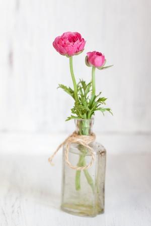 Tow pink ranunculus in old vintage bottle photo